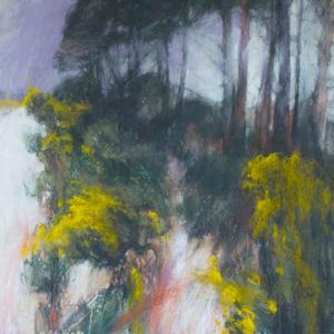 Haldon Forest Gorse
